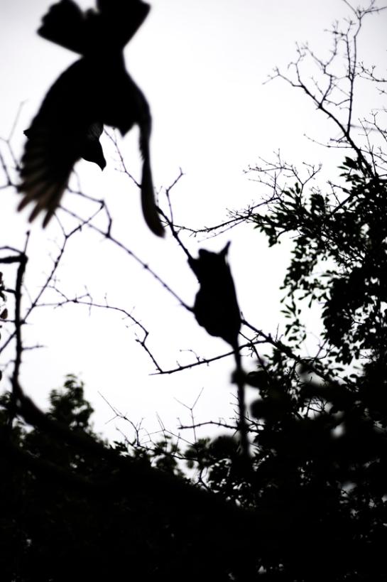 Birds of Prey x J.Dragonette