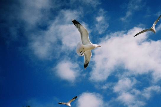 Free bird x J.Dragonette