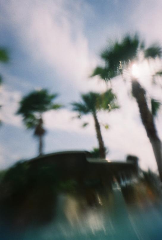 Palms x J.Dragonette